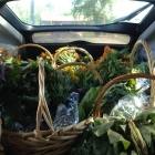 Trunk full of CSA baskets ready for delivery