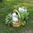 First CSA baskets, ready for delivery!