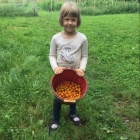 Lucy picks cherry tomatoes