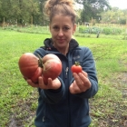 Susan with tomatoes