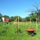 Pasture with vegetable beds and wheel barrow of tomatoes